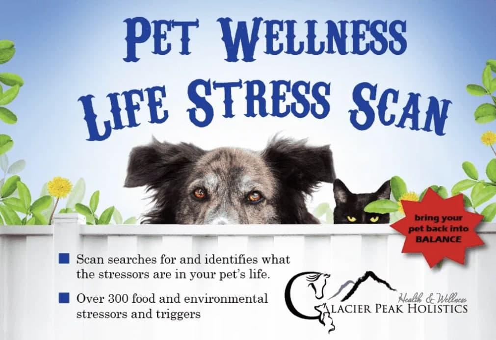 Glacier Peak Pet Wellness Life Stress Scan | Food & Environmental Sensitivity Test | Holistic Healthcare for Dogs & Cats